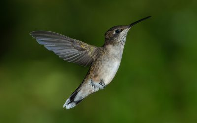 History of Flight- Learning From The Birds