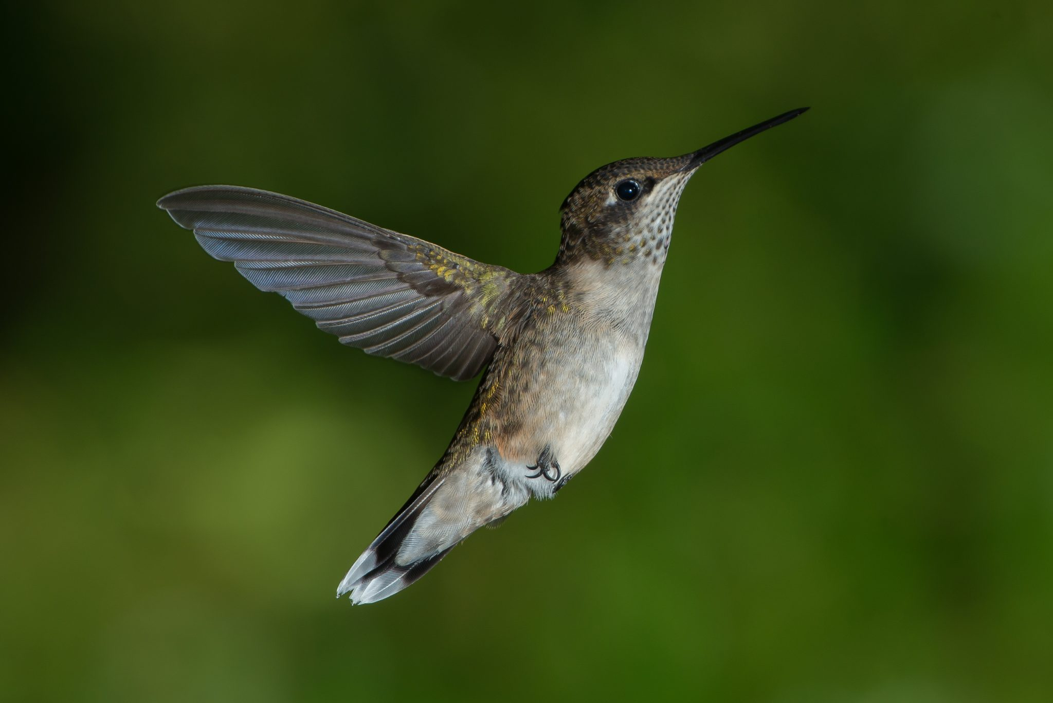 History of Flight - Learning From The Birds